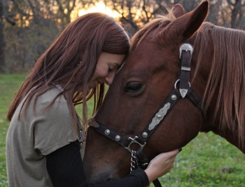 Spending time with horses can make teenagers less stressed, study reveals.